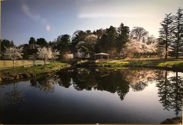 城山の桜Ⅰ(写真)坂直孝