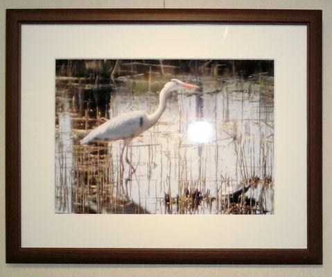 写真 白鷺と亀(埼玉古墳群の池)林 壽一