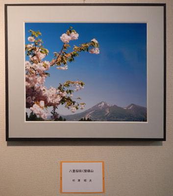 「八重桜咲く磐梯山」村澤昭夫 写真