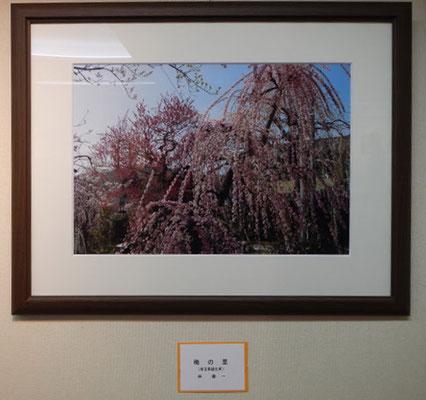「梅の里(越生)1」林壽一 写真