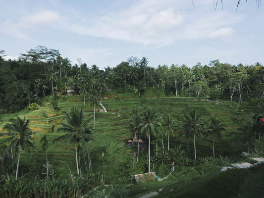 Tegalalang rice fields.