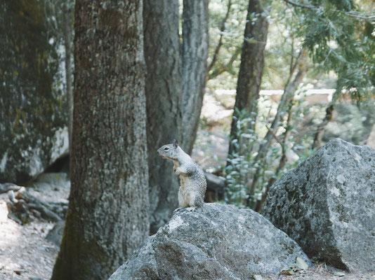 Écureuil qui fait l'ours...