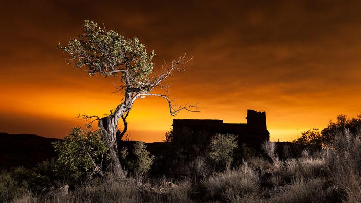 el árbol se movió, Alicante, Spain