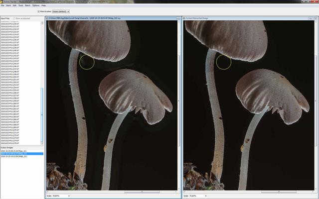 """Zerene: das Ergebnis der zweiten Methode DMAP, links mit mittlerem, rechts mit höherem Schwellwert: Deutlich zu sehen sind die """"Halos"""" im linken Bild. Das Bild rechts mit dem vermeintlich zu hohen Schwellwert ist das deutlich bessere Ergebnis."""