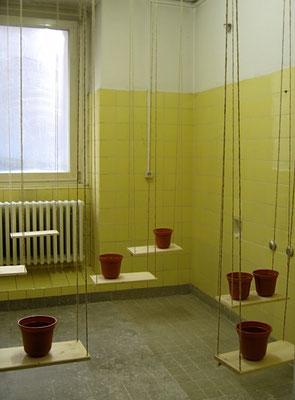 Rauminstallation   2007   alte Fassung, Ausstellung Herschelbad MA   Schaukeln,  Blumentöpfe, Sound