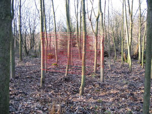 das gerechte maß   2007   Installation mit Bäumen