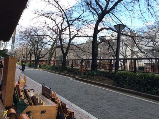 エアーショップからの風景、中目黒の桜は、まだまだつぼみですね。 sioux&lily(スー&リリー)小さな雑貨屋です。