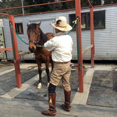 久しぶりに馬に乗って来ました。 sioux&lily(スー&リリー)小さな雑貨屋です。