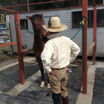 久しぶりに馬に乗って来ました。馬と目が・・・ sioux&lily(スー&リリー)小さな雑貨屋です。