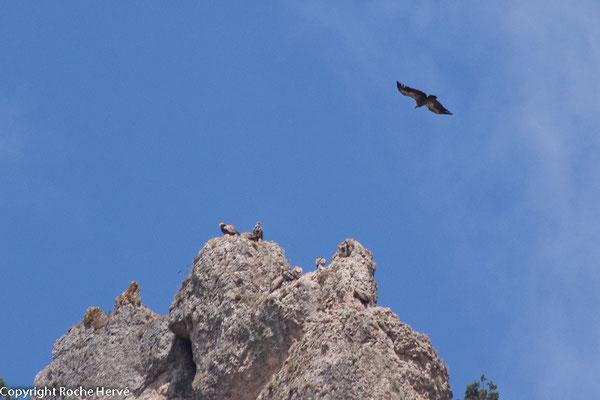 un vautour qui se pose sur un rocher