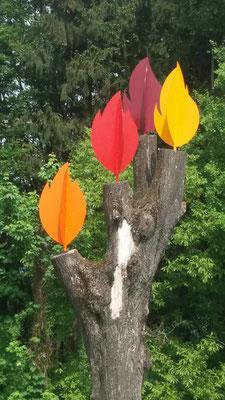 Pax Natura Naturbestattung - Baum- und Wiesenbestattung