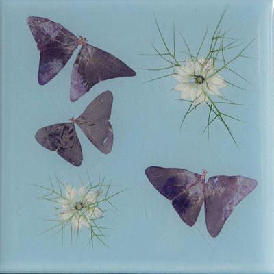 Schmetterlinge 10 x 10