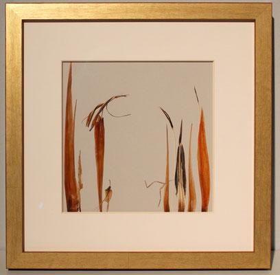 Triologie aus gepressten Strelitzien 30 x 30 - Altus-Artwork