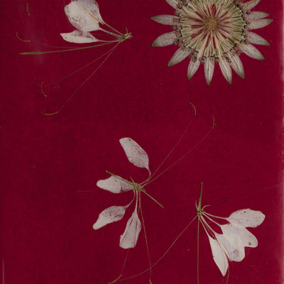 rote Fliese 15 x 20
