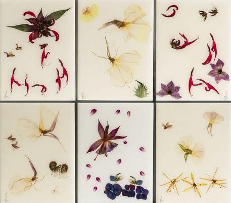 Variationen in elfenbein