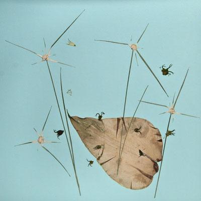 Gewimmel und Getümmel am Tümpel. Kleine Frösche bevölkern ein großes Blatt und erkunden springend ihre Umgebung.