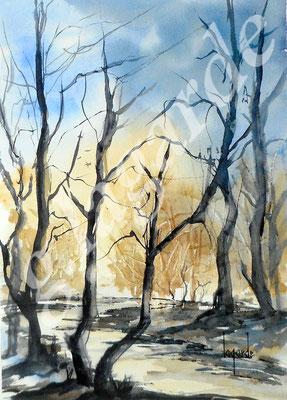 119 Forêt parchemein