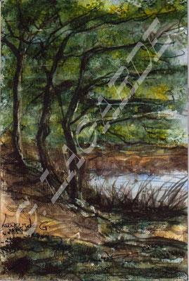 22 La forêt de le sorcière 28x21