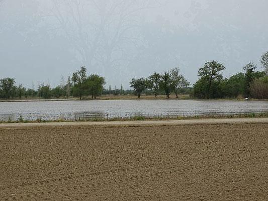 Reisfelder vor der Anpflanzung