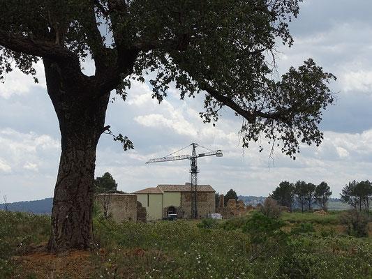 """Die Aufnahme zeigt die Ruinen des Augustiner-""""Klosters"""" (Canonica) von einer Korkeiche (Roure) aus. Der Legende nach wurde das Bildnis der Muttergottes  von einem Stier unter einer Korkeiche """"entdeckt"""""""