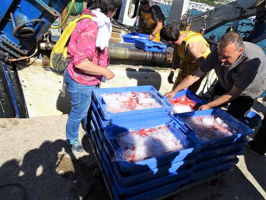 Mal sehen, was die Fischer gefangen haben