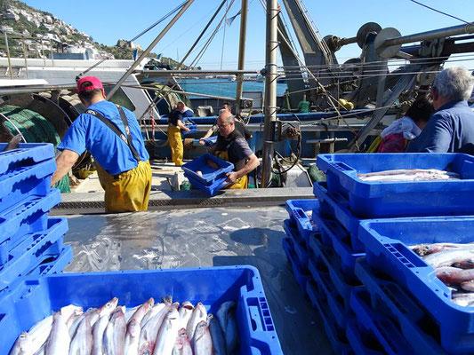 Die Fischkisten werden an Land gebracht