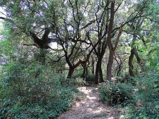 ...durch den Eichenwald