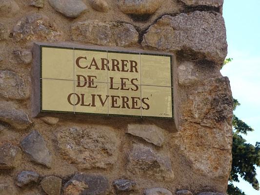 Hier geht es zu den uralten Olivenbäumen