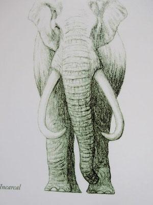...eines Vorfahren unserer Elefanten. Das waren schon gewaltige Tiere, die damals lebten (vor ca. 1 Million Jahren) !