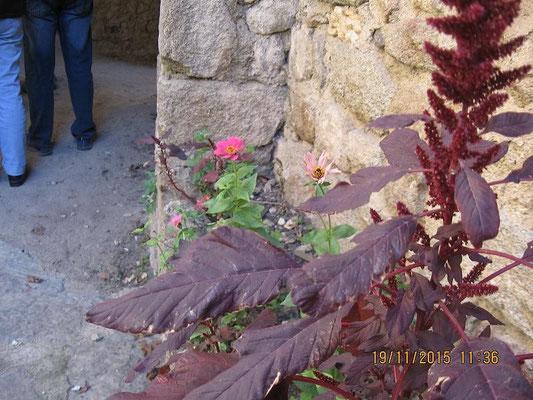 Pflanzenidylle am Wegrand