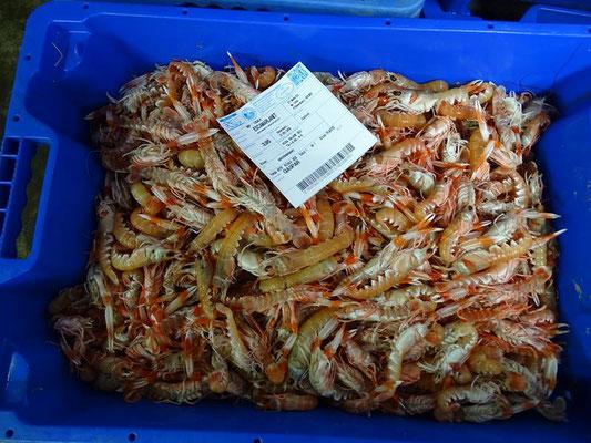 So sehen die Fischkisten nach dem Kauf aus (mit Bestimmungszettel)