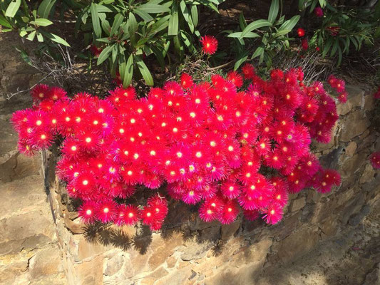 Schöne Büten - aber wie heißen sie?