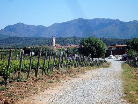 ...und durch die Weinfelder hindurch geführt