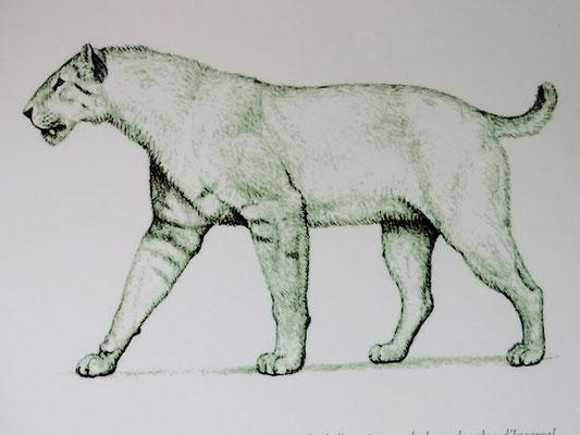 So sah der Tiger aus, dem wohl noch unsere ganz frühen Vorfahren begegnet sind