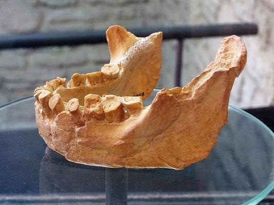 Das Museum zeigt menschliche Funde aus der Alt- bis zur Jungsteinzeit und dem Mittelalter. Hier der Unterkiefer (Abguss) einer Neandertalerin (50 000 v. Chr. ?). Man beachte die abgeschliffenen Zähne!