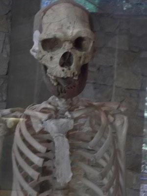 Skelett (ergänzt) eines Menschen von Tautavel (Museum)