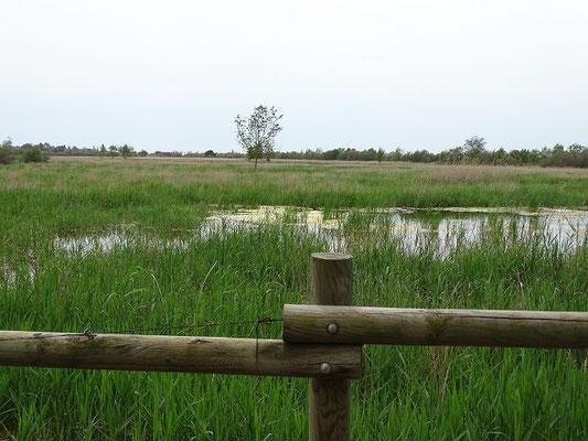 Salzwiese mit Lagune