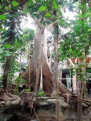 Südamerikanischer Regenwald