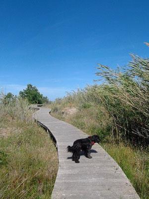 Ein Wanderer über Feuchtgebiet