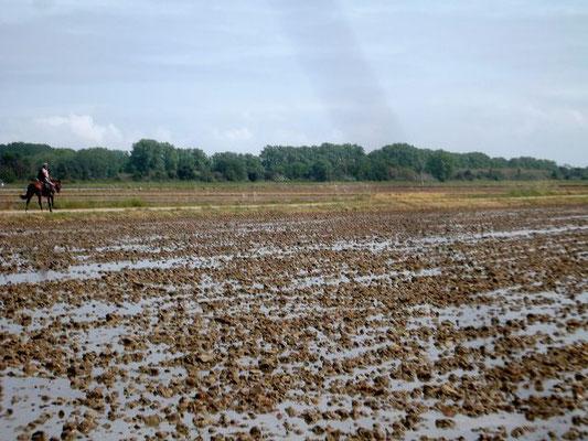 Blick auf die Felder
