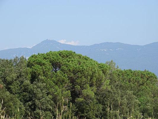 Schöne Aussicht auf Berge (Mare del Déu del Mont)