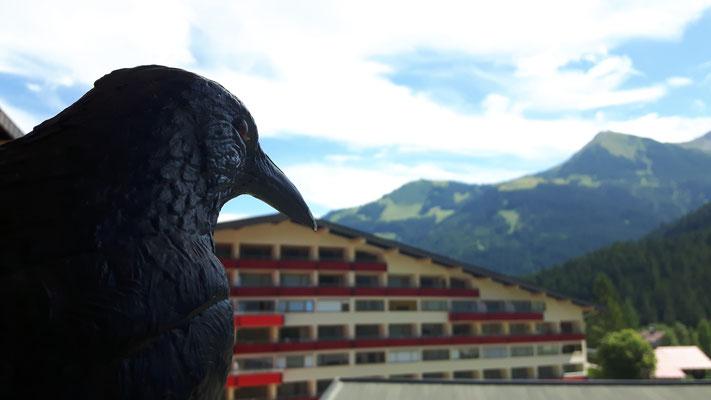 Die Krähe der Familie Krah auf dem Balkon der Ferienwohnung.
