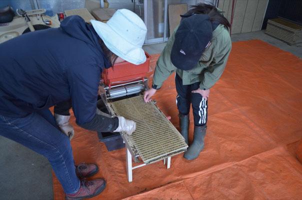 4月18日に稲の播種を行いました。