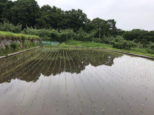 6月2日田植えが済み水鏡の水田