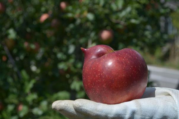 こんな形の果実を発見