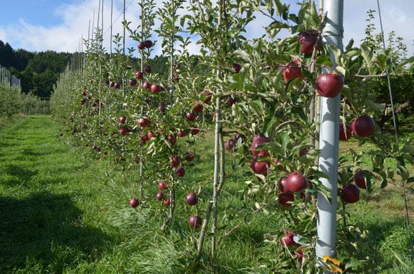 幼木に実る果実
