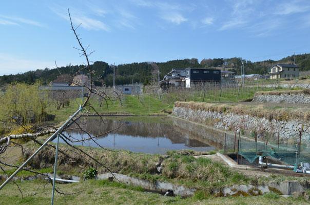 水田に水が入りました