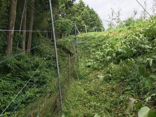 電気柵周辺の草刈り