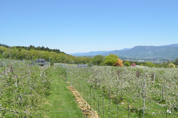 果樹園越しに伊那谷を観る2