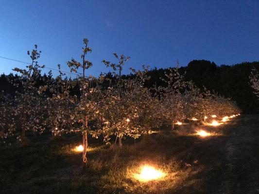 燃焼資材を焚く果樹園